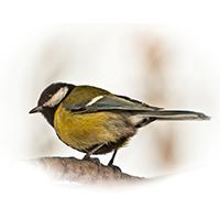 Ptici1
